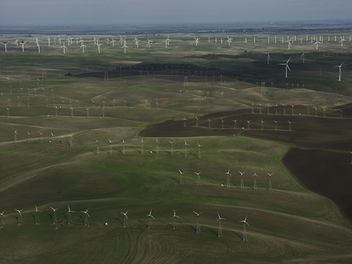 California Wind Turbine Farm
