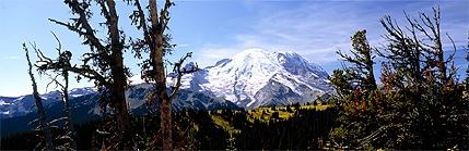 Panorama of Mt. Rainier from the Sunrise Highway