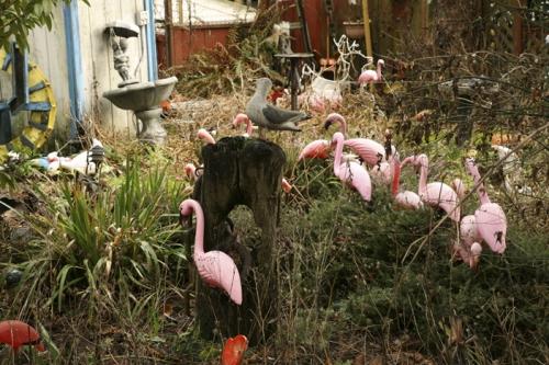Flamingos Feeding in the Wild