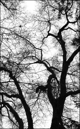 Tree - Winter